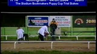 Any More Wins The Stadium Bookmakers Puppy Cup Trial Stakes - Nottingham - 4 Oct 2004