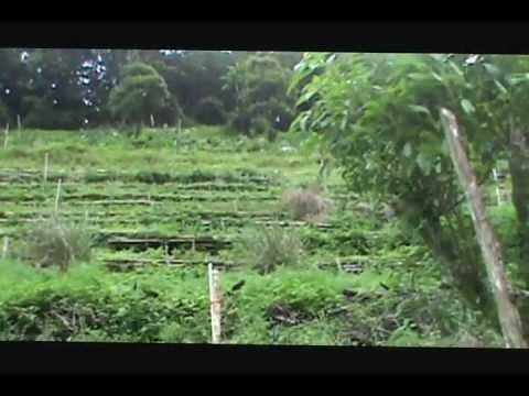 Organic Farming in Panama Pt 1