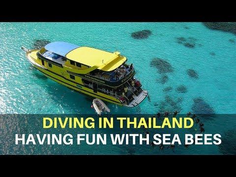 cdd4adb7e2f22f Tauchen mit Sea Bees Diving | Preisgekrönte Tauchschule in Thailand