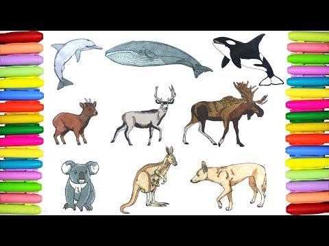 Wild Animals Coloring Book Episode 3