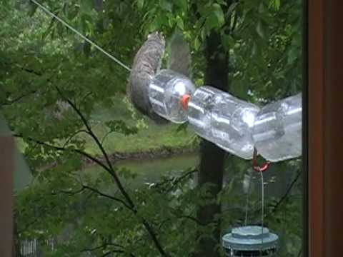 Squirrel On Bird Feeder And Not Getting Any Seeds Youtube