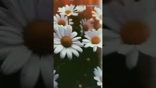 En güzel kürtçe kısa şarkı whatsapp durum videoları aşk ve duygusal 91