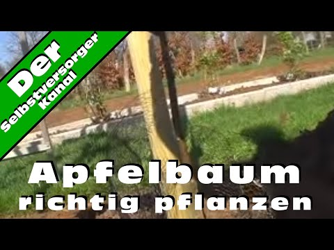 apfelbaum richtig pflanzen youtube. Black Bedroom Furniture Sets. Home Design Ideas