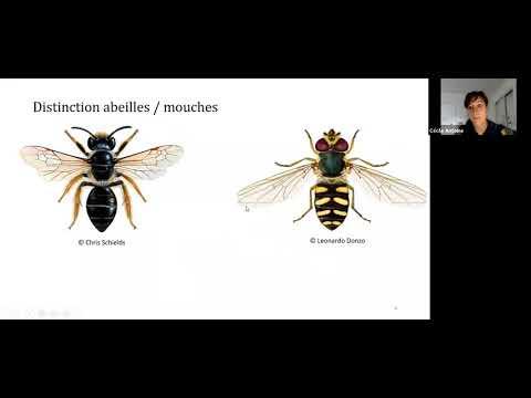 Découvrez une partie de la diversité des abeilles sauvages du Canada
