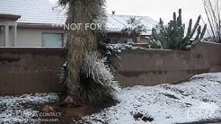 01-01-19 Tucson, AZ - Winter Storm  Extremely Rare Desert Snow Impacts New Years Eve&Day Festivities