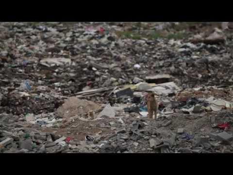 Recycle Beijing (2011)