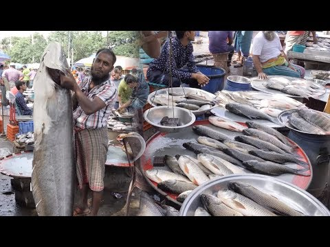 Cheapest Fish Market In The World | Fish Market In Bangladesh