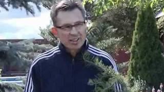Хвойные растения в дизайне сада(Карликовые хвойные деревья, кустарники, ели, сосны - постоянные элементы ландшафта, особенно ценные тем,..., 2011-04-05T12:07:22.000Z)