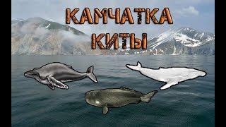 Російська Рибалка 3 Норвегія -- Камчатка, Кити