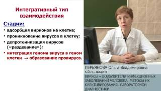Вирусы - возбудители инфекционных заболеваний человека. Культивирование и диагностика. О.В.Перьянова