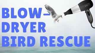 Saving a Frozen Bird With A Blow Dryer!