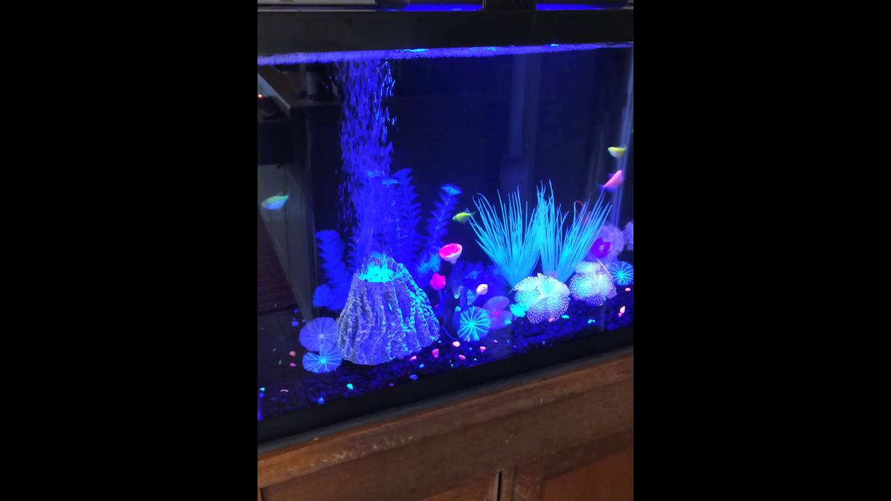 20 gallon high glofish tetra tank. - YouTube