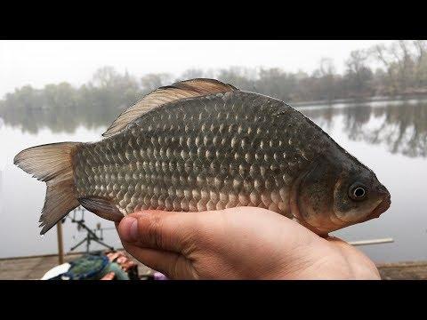 Экспериментальная рыбалка на карася в ноябре - таки уговорил их клевать