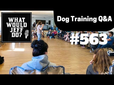 dog-training---training-puppies---growling-dogs---what-would-jeff-do?-q&a-ep.563-(2019)