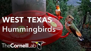 West Texas Hummingbirds, Sponsored by Perky-Pet®