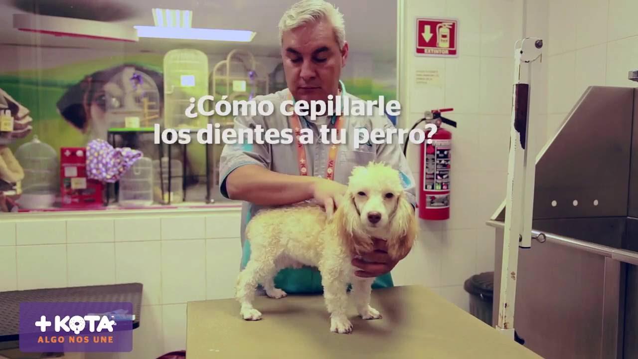 +KOTA presenta: Cómo cepillar los dientes de tu maskota