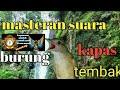 Masteran Burung Kapas Tembak Cocok Buat Trotol Murai Kacer Cucak Ijo  Mp3 - Mp4 Download