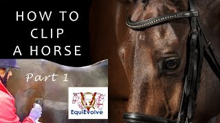 How To Clip A Horse - Clipping for the first time, Bib, Chaser and Trace Clip