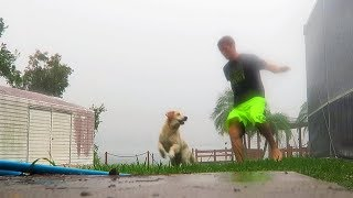 Super Cooper Sunday #27 - Playing In A Hurricane! (golden Retriever Puppy)