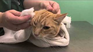 How to clean a cats ears