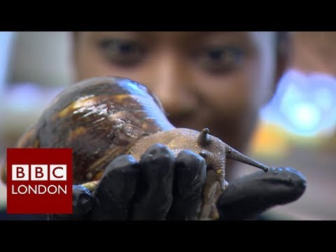 Leaving a City job to become a snail farmer in London – BBC London News