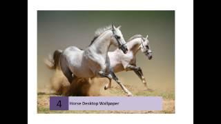 Best Horses Live Wallpaper Hd