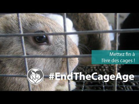 Vers la fin des cages en Europe