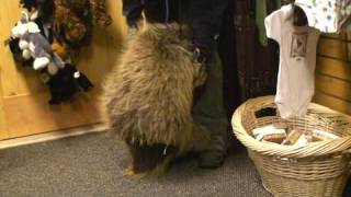 porcupine who thinks he is a puppy
