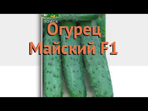 Огурец обыкновенный Майский F1 (mayskiy f1) 🌿 Майский F1 обзор: как сажать, семена огурца Майский F1