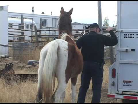 Woman with abused horses freaks out when news crew shows up with camera