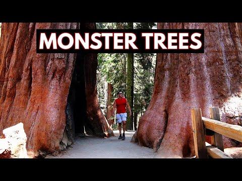 Sequoia National Park - Monster Trees (Vlog/Park #23)