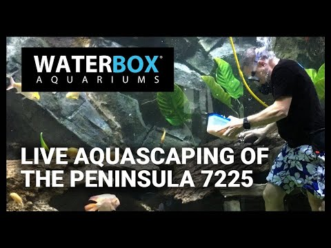 Live Aquascaping Of The Peninsula 7225 Youtube