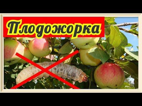 Обработка яблонь от вредителей (Плодожорки) | VolkoFF_video