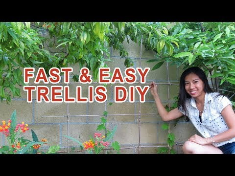 Easy fast Trellis DIY (No Skills Required)