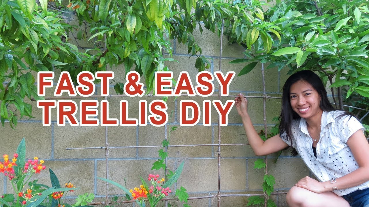 Easy fast trellis diy no skills required youtube easy fast trellis diy no skills required solutioingenieria Images