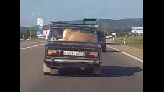 Собака в машине. по дороге на море 2012 г. август.