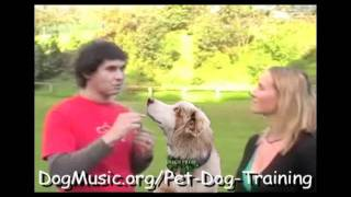 Interview With Doggy Dan, The Online Pet Dog Trainer, From Dog Music
