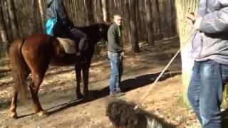 Собака и кони
