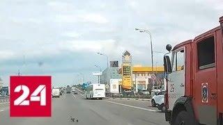 Подмосковный пожарный перекрыл шоссе ради утки с утятами - Россия 24