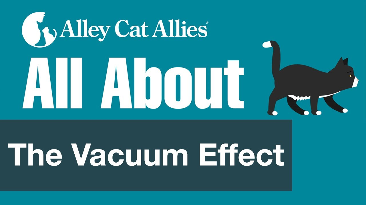 All About The Vacuum Effect