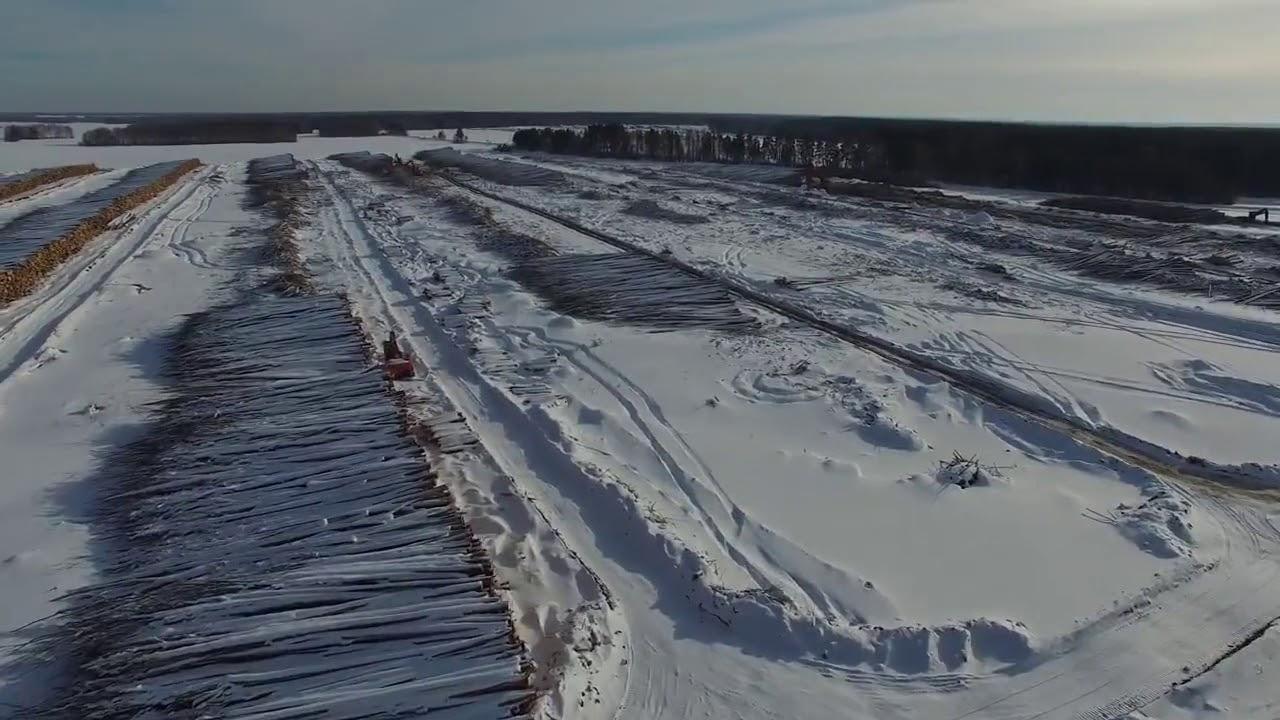 Китайским инвесторам в Томской области в аренду отдали 2 млн. гектаров лесных угодий