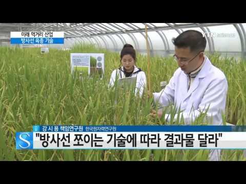 [YTN 사이언스] 방사선 이용해 새 쌀 품종 개발 / YTN 사이언스