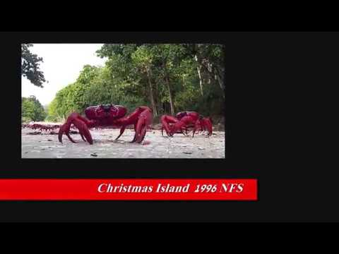 JIMMY BUFFET - CHRISTMAS ISLAND
