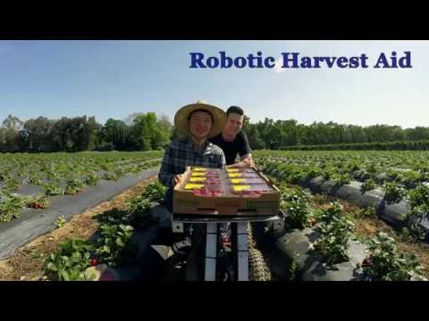 Robotic Strawberry Harvest Aid