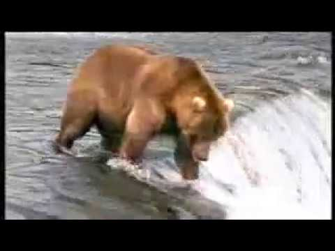 New John West Salmon Ad Bear Vs Fisherman ( Divert ).flv