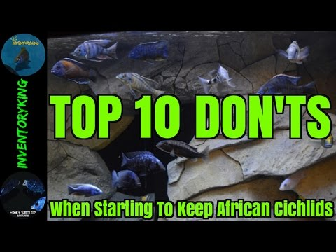 Top 10 Don'ts When Starting To Keep African Cichlids | Tips