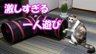 猫の激しすぎる一人遊び The cat of excitement in toys thumbnail