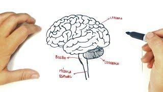 Cómo dibujar el Cerebro Humano paso a paso | Dibujo fácil de un Cerebro Humano