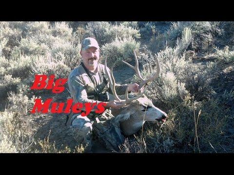 Hunting Big Oregon Mule Deer