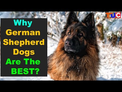 Why German Shepherds Are One Of The Best Dog Breeds : TUC